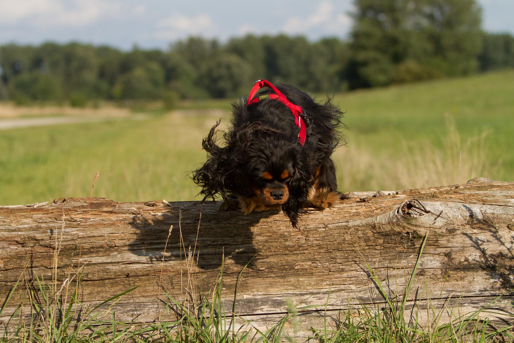 Tricks und Fun für  kleine Hunde und mittelgroße Hunde